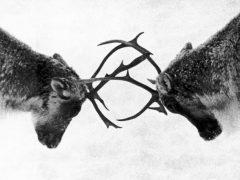 Image tirée de « Un pays sans bon sens !». Réalisé par Pierre Perrault. Produit par Guy L. Coté, Tom Daly et Paul Larose, 1970. Photo : ONF et Services gouvernementaux Canada